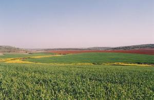 Tell Burnat - Fields in spring time